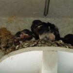 巣が小さくなりました。